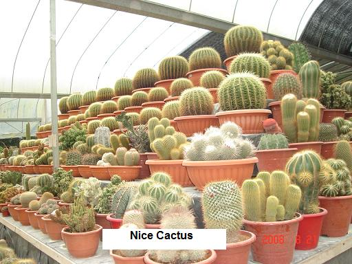 cameron highlands cactus farm